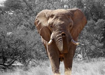 elephant-84186_960_720.jpg